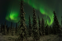 Night in the magical boreal forests around Fairbanks Alaska  Aurora Borealis