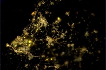 Nighttime view of the Netherlands taken by Andr Kuipers from the ISS