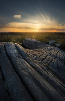 No crazy mountains or trees here just some nice driftwood and a pretty sunset Richmond BC