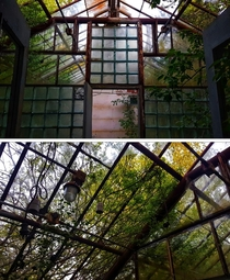 No idea why theres a greenhouse in an abandoned police station Beautiful tho