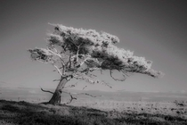 North Jutland Denmark when trees are photographed with an infrared filter