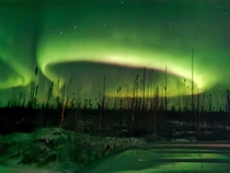 Northern Lights Northern Canada Boreal Forrest