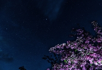 Not a best photo of stars but tree adds some abstraction Photo taken in Lithuania with - sony lens