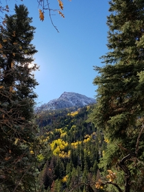 Not a photographer just saw this on a hike in Carbondale Colorado