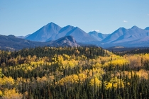 Not so subtle Fall Colors in Denali National Park Alaska