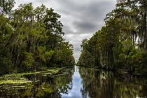 Not your typical EP image but theres something eerily beautiful about the Jean Lafitte Bayou LA