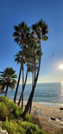 November in Laguna Beach