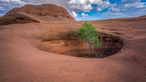 Oasis in the Arizona Desert  by Laurie R Martin