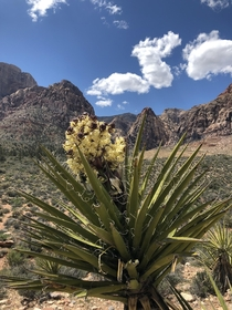 OC Red Rock Canyon Las Vegas Beginning of Dales Trail x