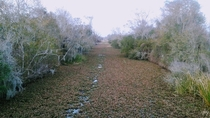 OC This freshwater marsh looks like a path when covered in leaves Bayou Coquille Trail Louisiana