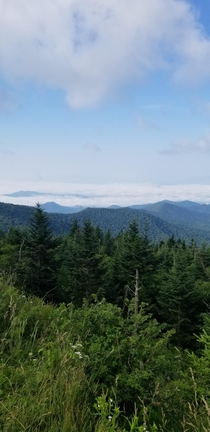 OC This was taken near the peak of Clingmans Dome Sonola Valley North Carolina