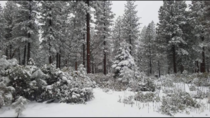 OC Winter wonderland  Sierra mountains outside of susanville California