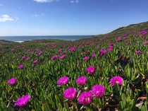 Ocean Bloom - Point Reyes National Seashore -