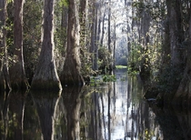 Okefenokee Swamp Georgia USA