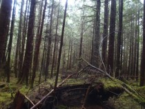 Old abandoned logging road in the heart of British Columbias forest