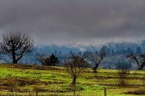 Old apple orchards at Forestville Sonoma County CA USA