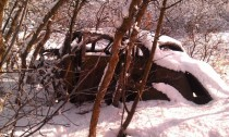 Old car in the foothills above Ogden Utah Oak trees have grown around it and its at least a mile from any roads