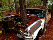 Old car with tree growing through the hood in AlabamaxOC