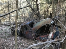 Old Chevy  Parked In The Woods