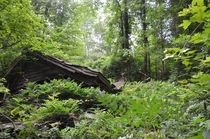 Old collapsed house in the woods Virginia