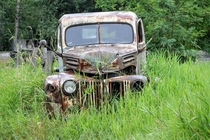 Old Ford truck dying a slow death in Aldergrove BC - Album in comments OC X