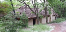 Old Korean house being eaten by trees