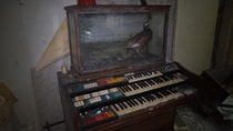 Old Organ and a Stuffed Pheasant Found in Abandoned House