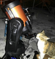 Old picture of my cat Madonna being curious about the shiny light of the moon coming out of my telescopes eyepiece