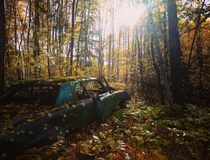 Old Pontiac being reclaimed by nature - Sudbury Ontario