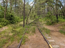 Old railroad tracks in the New Jersey Pine Barrens