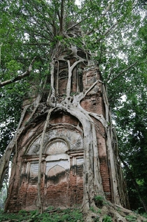 Old Shiva temple firmly embraced by the sacred Bodhi tree in Bangladesh Photo by Bangladesh Unlocked