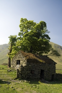 Old Stone Barn with a tree growing out of it Photo by Jeff Reed