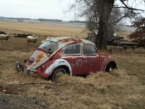 Old Volkswagen at my grandpas farm