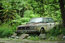 Old Volvo in Malaysian rainforest