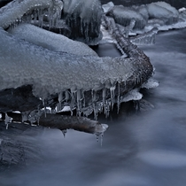 Old wood trunk covered in ice at Storfossen Trondheim Norway
