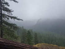 Olympic National Forest - WA