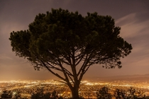 On top of a mountain sits a lonely tree that overlooks Los Angeles -Wisdom Tree