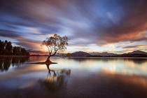 One Calm Tree Wanaka New Zealand