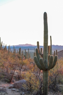 One of my favorite pictures Ive ever taken I was at Saguaro National Park around sunset and the colors started popping