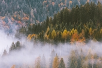One of my favorite sites is watching fog travel through a forest Southern Bavaria by ravivora
