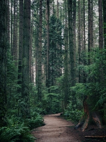 One of my favourite places to go for a walk Pacific Spirit Park in Vancouver BC
