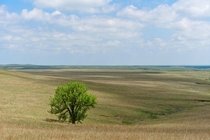 One of the last remaining areas of undisturbed prairie Kansas