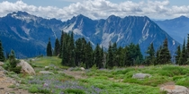 One of the prettiest hikes in the world Skyline Trail on Mount Rainier