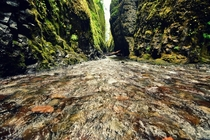 Oneonta slot canyon part of the Columbia River Gorge Oregon