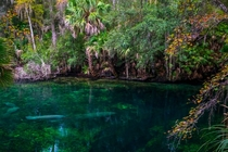 Opening of the Spring Blue Springs Florida