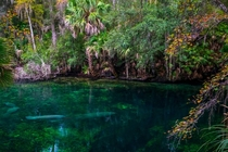 Opening of the Spring Blue Springs Florida  by  mynameisntjeffrey