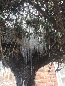 Orangeburg New York USA - They always seem to freeze like this whever I have snow