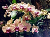 Orchids in Penang Malaysia