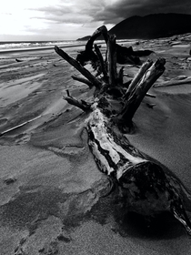 Oregon Coast     BW version