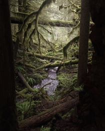 Oregons moss covered rain forest